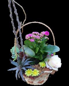 Aranjament flori naturale, cod AF16