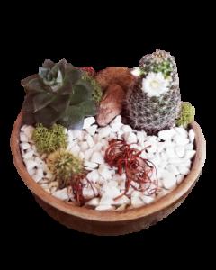 Aranjament plante suculente, cod APS02