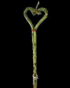 Aranjament bambus, cod AF33